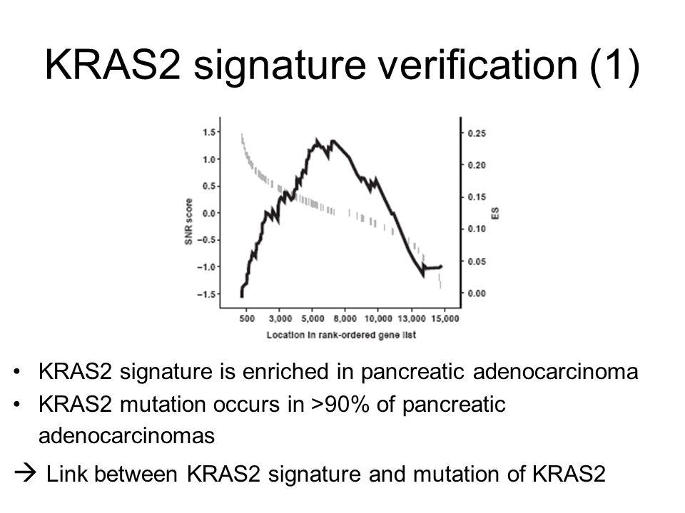 KRAS2 signature verification (1) KRAS2 signature is enriched in pancreatic adenocarcinoma KRAS2 mutation occurs in >90% of pancreatic adenocarcinomas