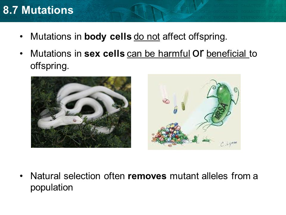 8.7 Mutations Mutations in body cells do not affect offspring. Mutations in sex cells can be harmful or beneficial to offspring. Natural selection oft
