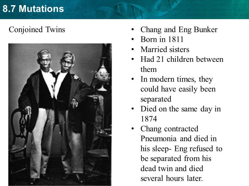 8.7 Mutations Chang and Eng Bunker Born in 1811 Married sisters Had 21 children between them In modern times, they could have easily been separated Di