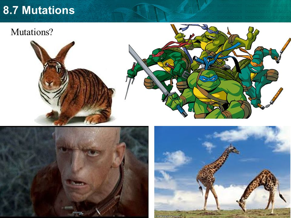 8.7 Mutations Mutations?