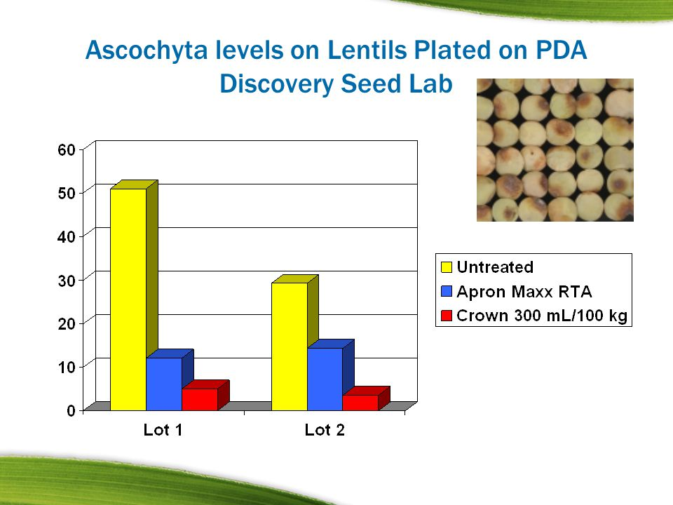 Ascochyta levels on Lentils Plated on PDA Discovery Seed Lab