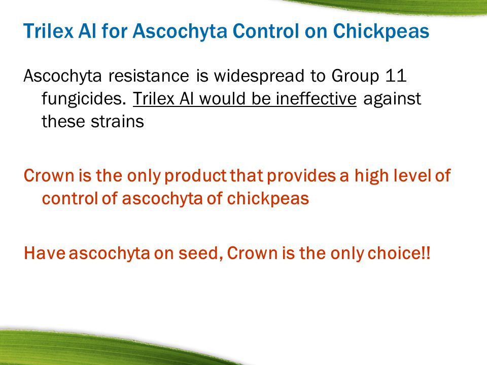 Trilex Al for Ascochyta Control on Chickpeas Ascochyta resistance is widespread to Group 11 fungicides. Trilex Al would be ineffective against these s
