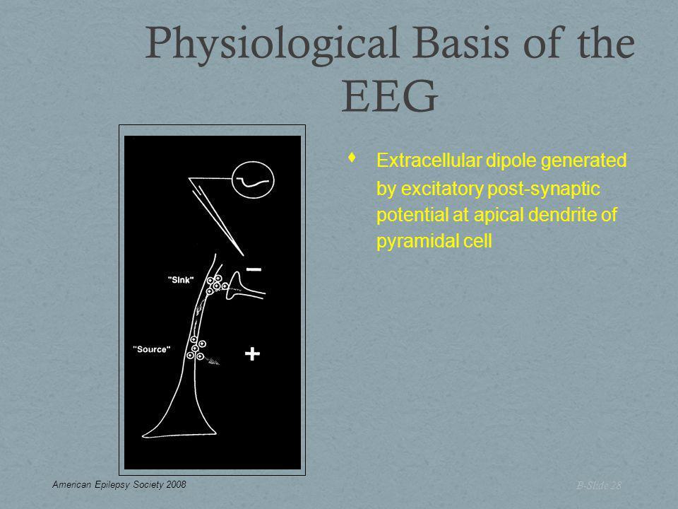 Physiological Basis of the EEG B-Slide 28  Extracellular dipole generated by excitatory post-synaptic potential at apical dendrite of pyramidal cell American Epilepsy Society 2008
