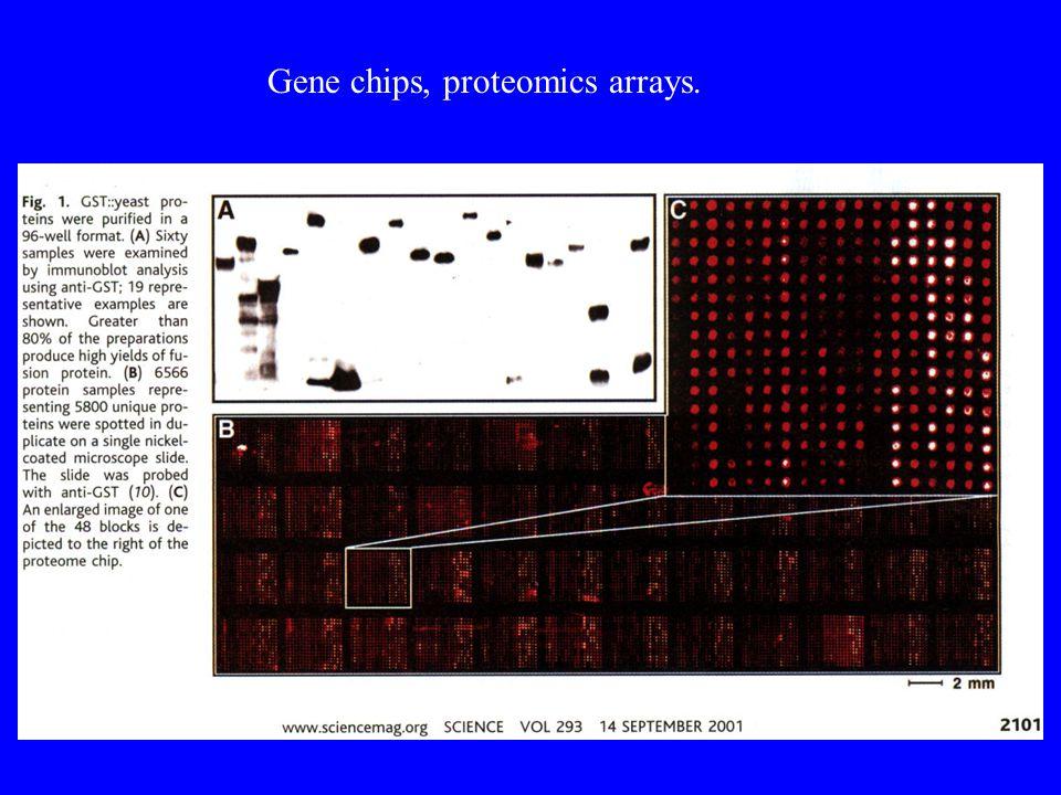 Gene chips, proteomics arrays.
