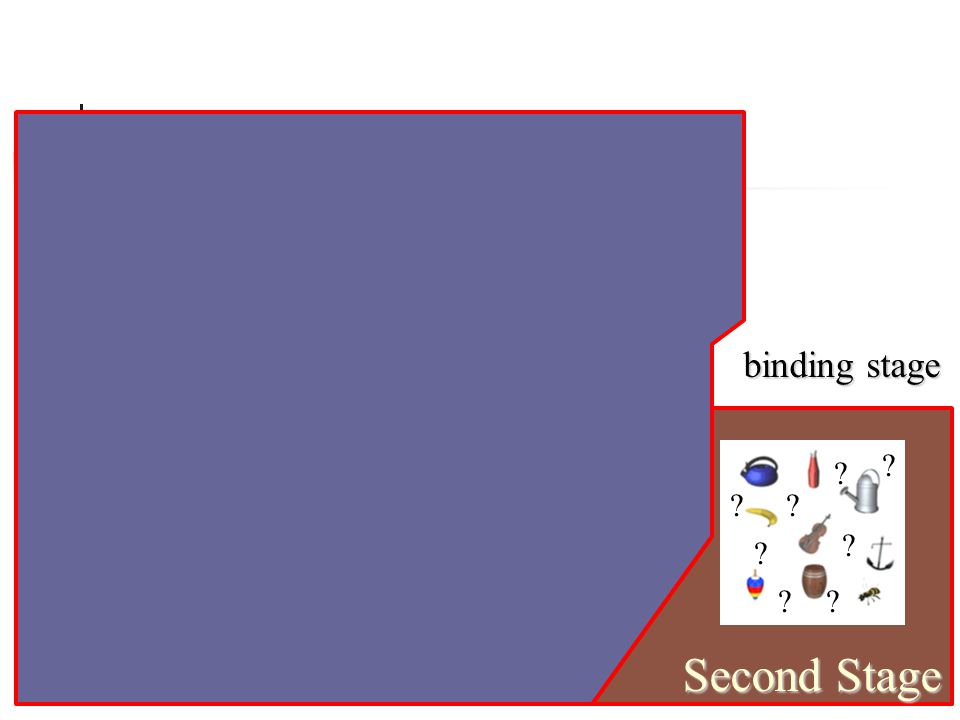 First Stage Bottleneck binding stage Second Stage ? ? ? ? ? ? ? ?