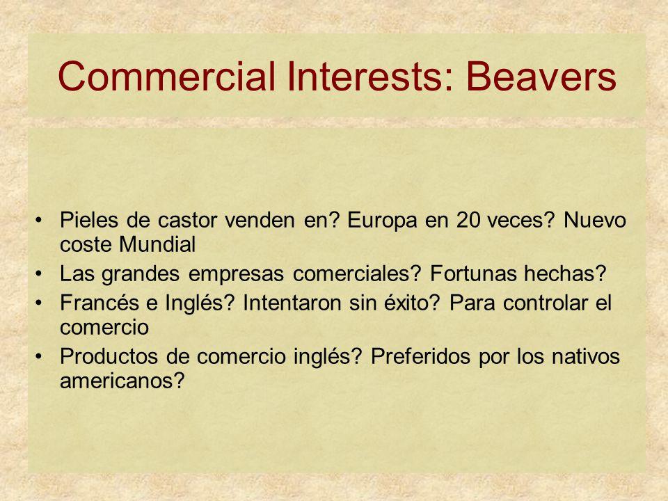 Commercial Interests: Beavers Pieles de castor venden en.