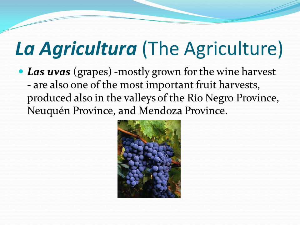 La Agricultura (The Agriculture) Las uvas (grapes) -mostly grown for the wine harvest - are also one of the most important fruit harvests, produced also in the valleys of the Río Negro Province, Neuquén Province, and Mendoza Province.