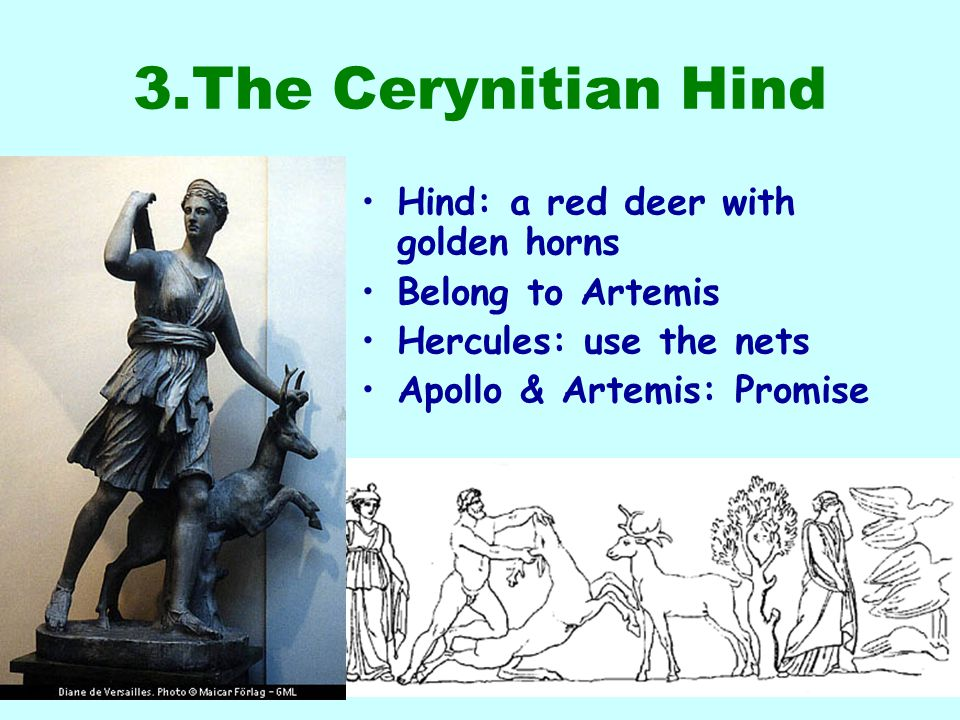 3.The Cerynitian Hind Hind: a red deer with golden horns Belong to Artemis Hercules: use the nets Apollo & Artemis: Promise