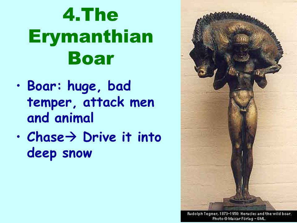 4.The Erymanthian Boar Boar: huge, bad temper, attack men and animal Chase  Drive it into deep snow