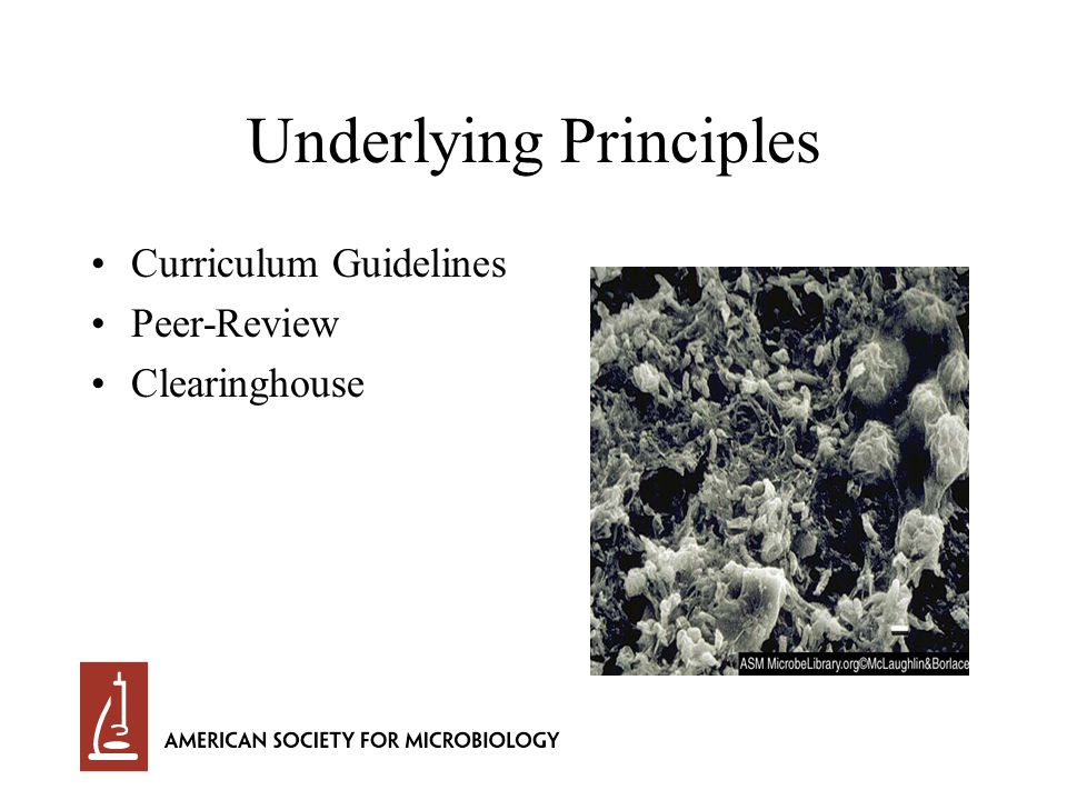 Underlying Principles Curriculum Guidelines Peer-Review Clearinghouse