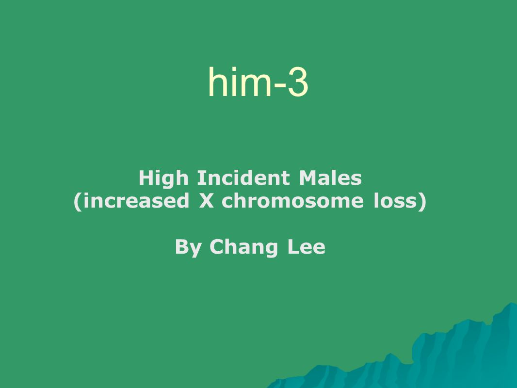 him-3 High Incident Males (increased X chromosome loss) By Chang Lee