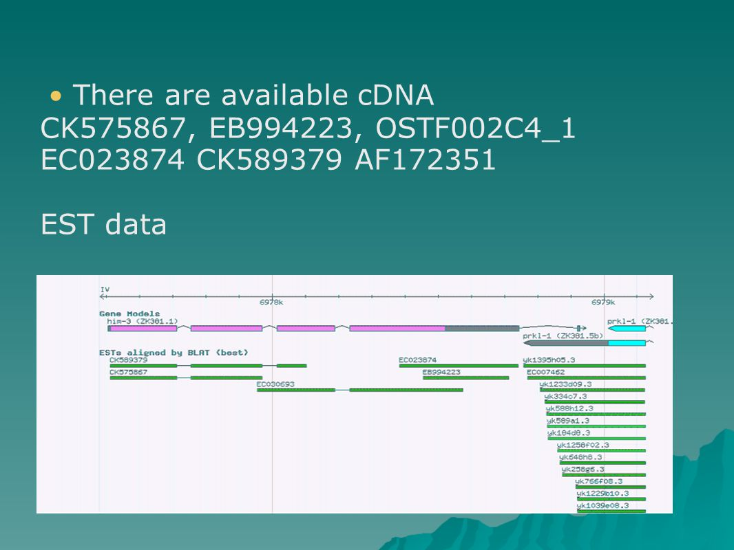 There are available cDNA CK575867, EB994223, OSTF002C4_1 EC023874 CK589379 AF172351 EST data