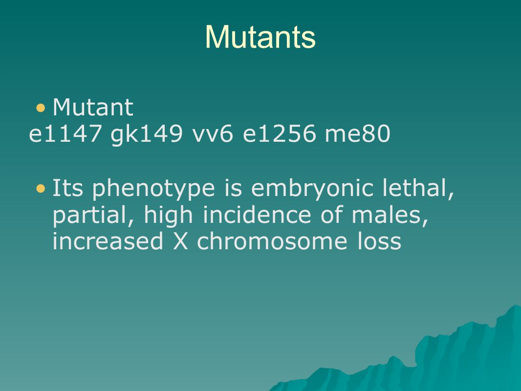Mutants Mutant e1147 gk149 vv6 e1256 me80 Its phenotype is embryonic lethal, partial, high incidence of males, increased X chromosome loss