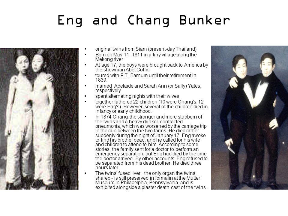 Eng and Chang Bunker original twins from Siam (present-day Thailand) Born on May 11, 1811 in a tiny village along the Mekong river At age 17, the boys were brought back to America by the showman Abel Coffin toured with P.T.