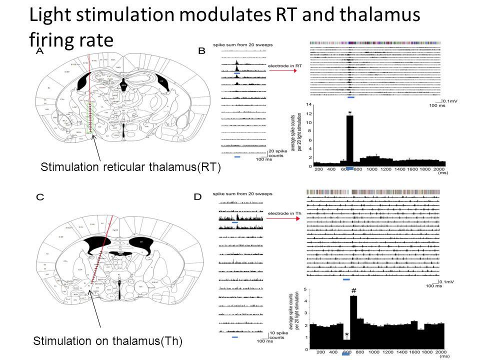 Cx Th Light stimulation in RT changes the firing pattern in cortex Primary somatosensory cortex(S1) P 1.82 mm L 2.5mm Reticular thalamus (RT) P 3.5mm L 2.0mm