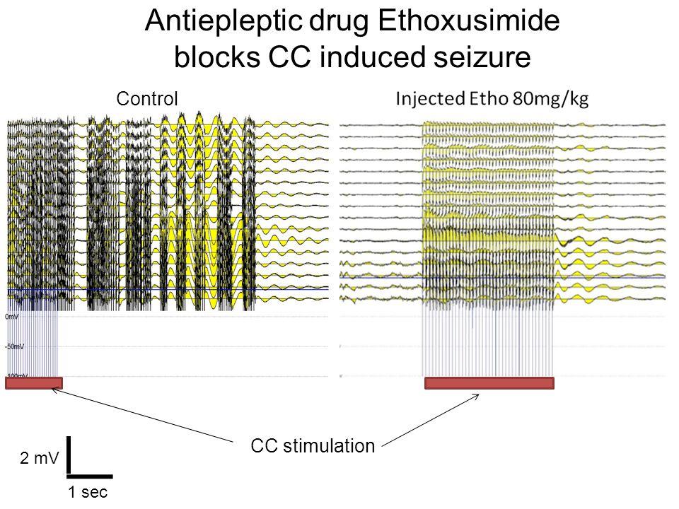 Antiepleptic drug Ethoxusimide blocks CC induced seizure 2 mV 1 sec CC stimulation Control