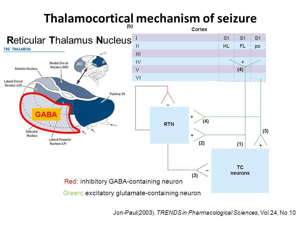 Thalamocortical mechanism of seizure Jon-Paul(2003).