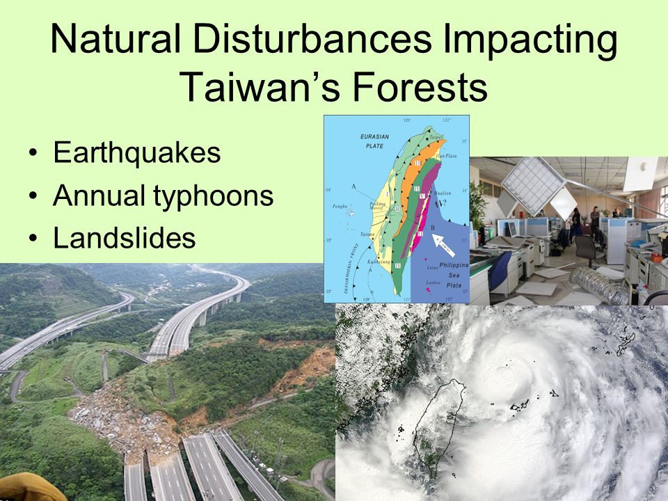 Exporting deforestation By not using its own wood resources, Taiwan has to import almost all of its wood.