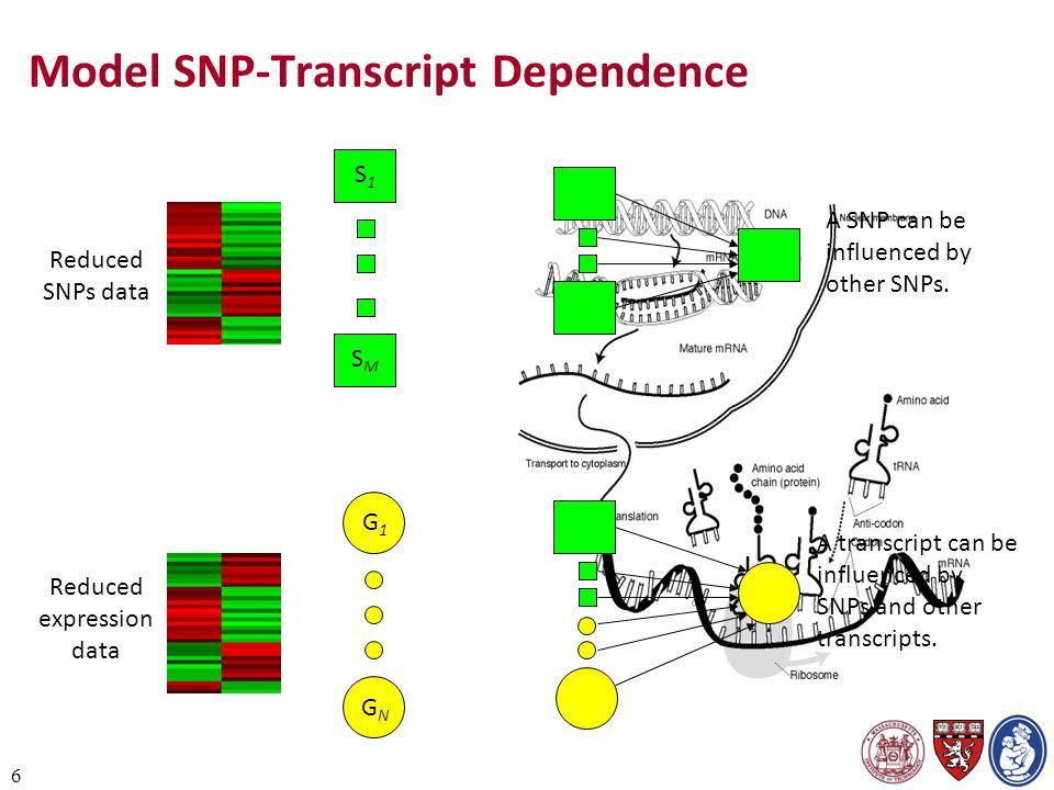 6 Model SNP-Transcript Dependence Reduced SNPs data Reduced expression data S1S1 SMSM G1G1 GNGN A SNP can be influenced by other SNPs. A transcript ca
