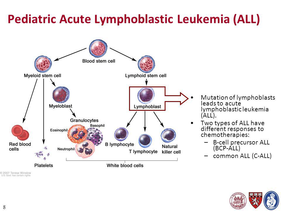 8 Pediatric Acute Lymphoblastic Leukemia (ALL) Mutation of lymphoblasts leads to acute lymphoblastic leukemia (ALL). Two types of ALL have different r