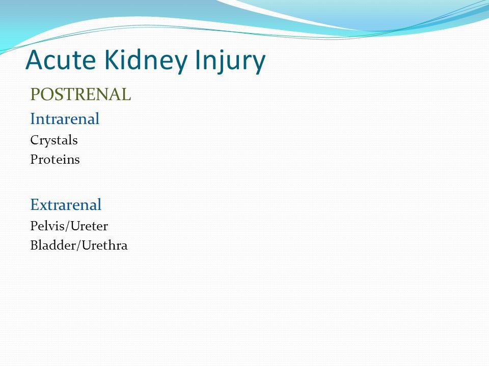 Acute Kidney Injury POSTRENAL Intrarenal Crystals Proteins Extrarenal Pelvis/Ureter Bladder/Urethra