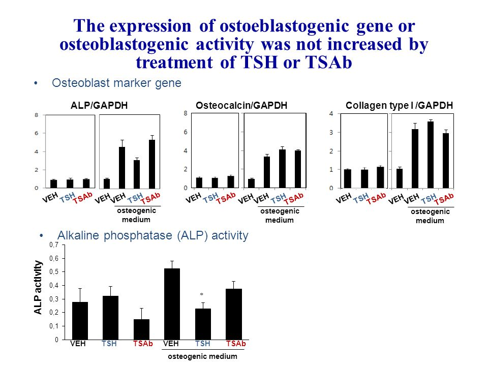 ALP/GAPDH Osteocalcin/GAPDH Osteoblast marker gene VEHTSHTSAb VEHTSHTSAb VEH osteogenic medium VEHTSHTSAb VEHTSHTSAb VEH osteogenic medium VEHTSHTSAb VEHTSHTSAb VEH osteogenic medium Osteocalcin/GAPDHCollagen type I /GAPDH Alkaline phosphatase (ALP) activity ALP activity VEHTSH TSAb VEHTSH TSAb osteogenic medium  The expression of ostoeblastogenic gene or osteoblastogenic activity was not increased by treatment of TSH or TSAb