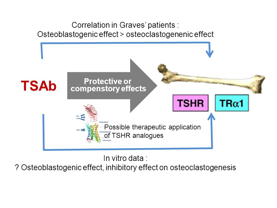 TSAb Protective or compenstory effects Correlation in Graves' patients : Osteoblastogenic effect > osteoclastogenenic effect In vitro data : .