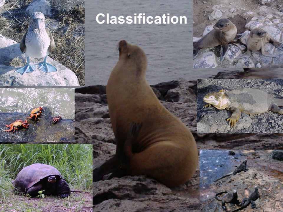 26 th Jan 2006 CERRO Classification