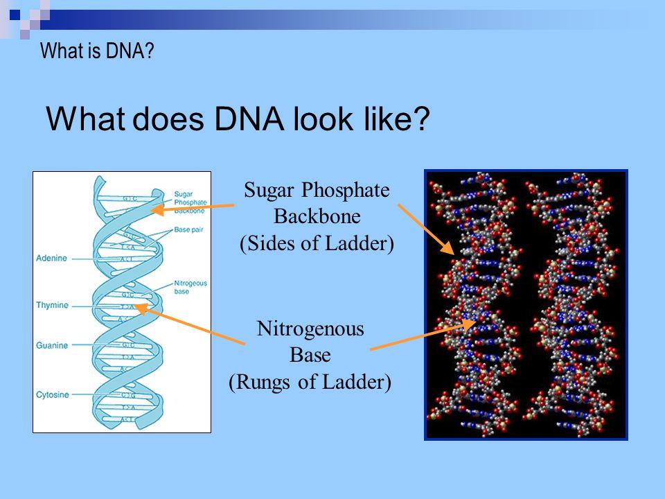 Person 1..GCCAGCTAGCTAGCTAGCTAGCTAGCTTTCAT..How does DNA differ among humans.