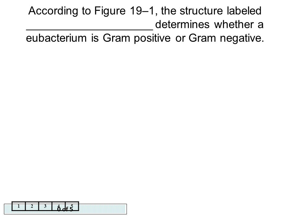 0 of 5 12345 According to Figure 19–1, the structure labeled ____________________ determines whether a eubacterium is Gram positive or Gram negative.