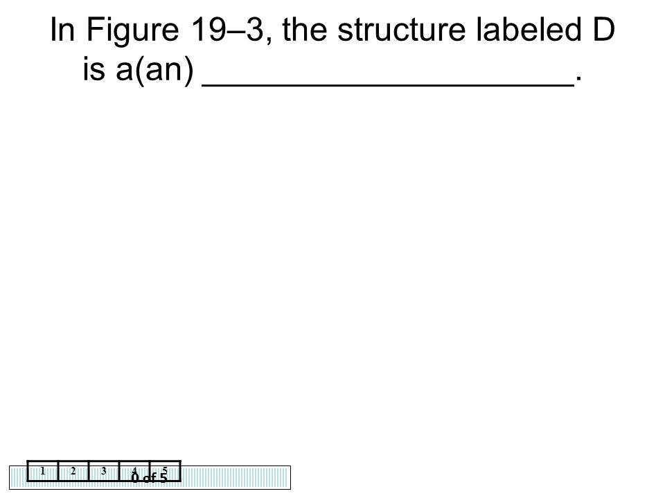 0 of 5 12345 In Figure 19–3, the structure labeled D is a(an) ____________________.