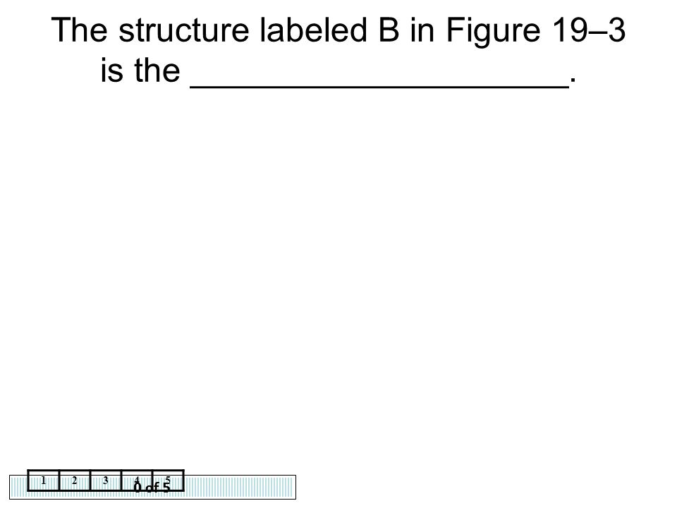 0 of 5 12345 The structure labeled B in Figure 19–3 is the ____________________.
