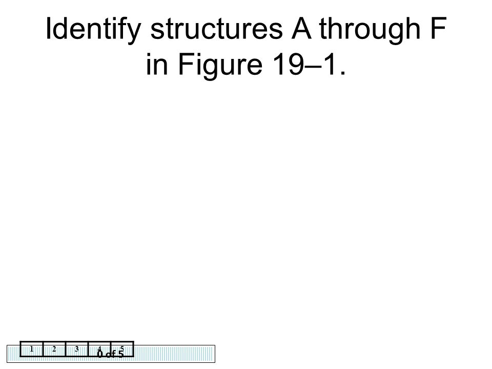 0 of 5 12345 Identify structures A through F in Figure 19–1.