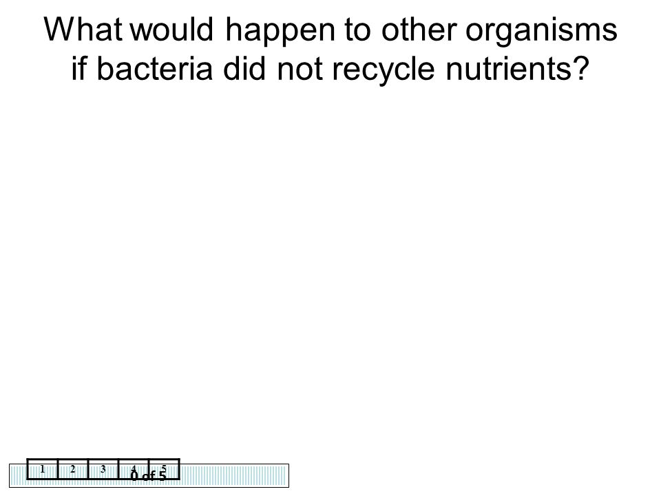 0 of 5 12345 What would happen to other organisms if bacteria did not recycle nutrients?