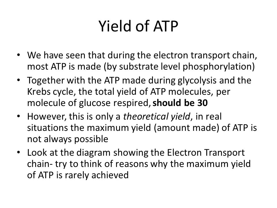 Yield of ATP We have seen that during the electron transport chain, most ATP is made (by substrate level phosphorylation) Together with the ATP made d