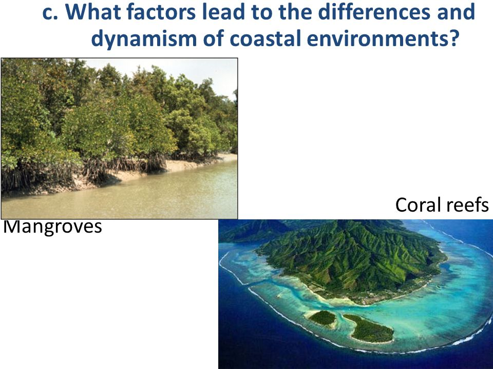 Mangroves Coral reefs c. What factors lead to the differences and dynamism of coastal environments?
