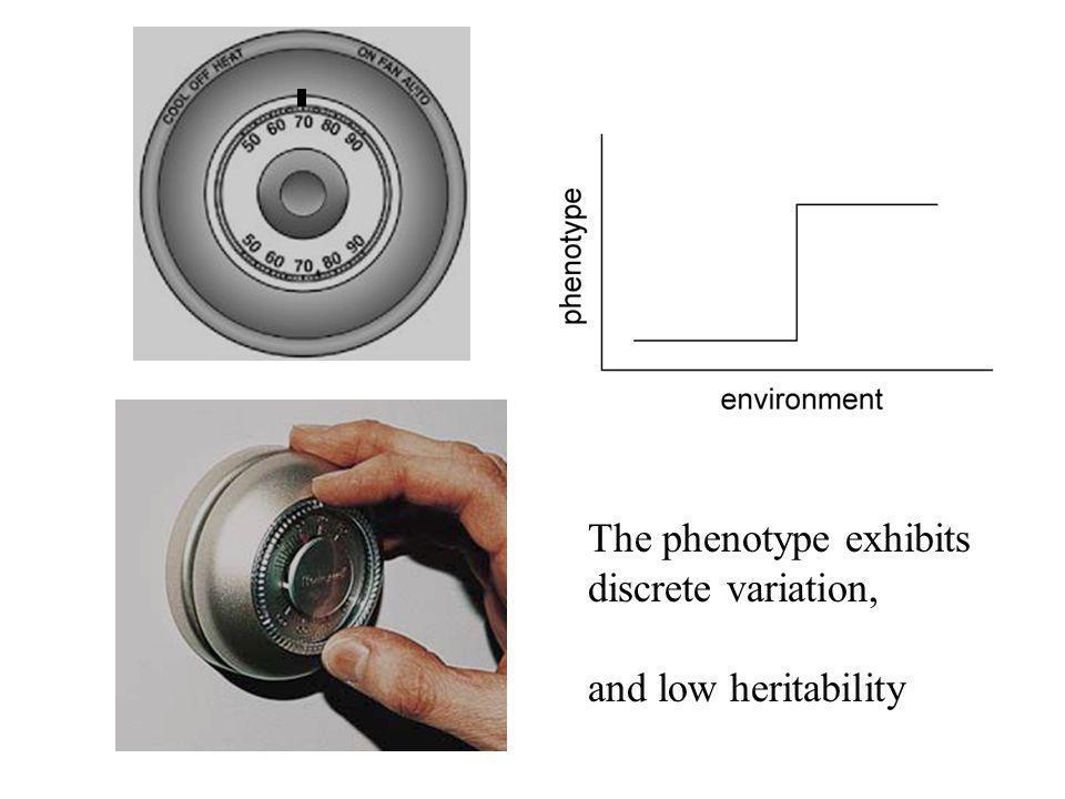 The phenotype exhibits discrete variation, and low heritability