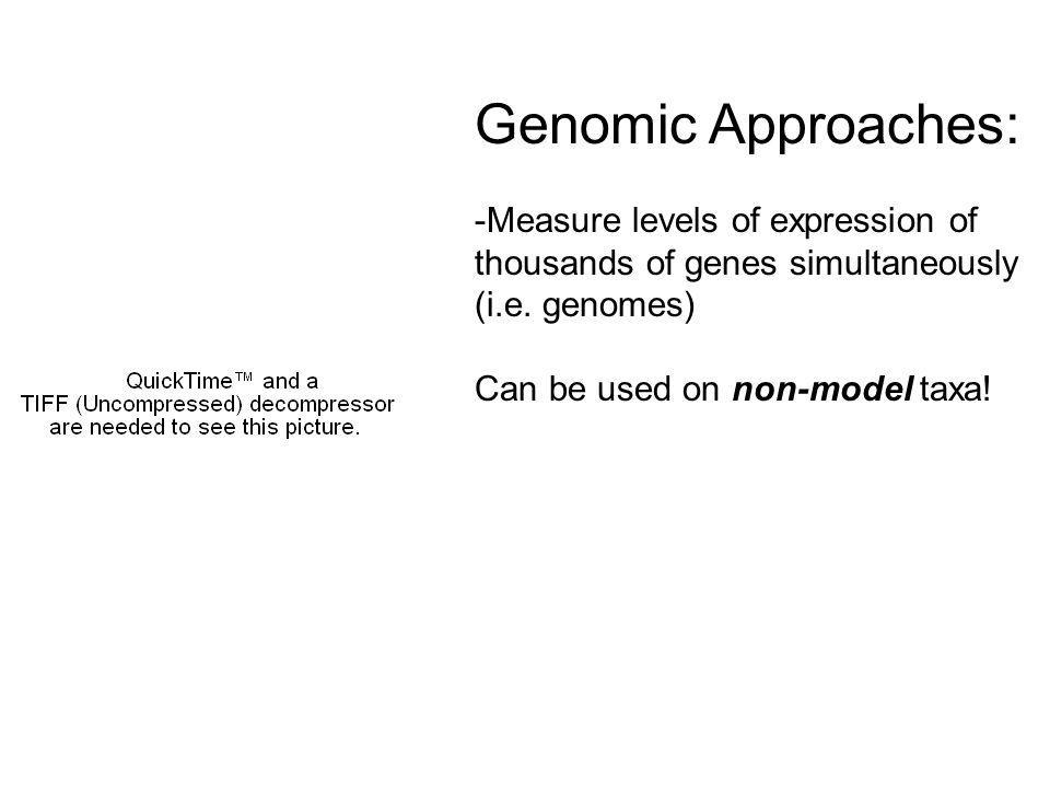 Genomic Approaches: -Measure levels of expression of thousands of genes simultaneously (i.e.