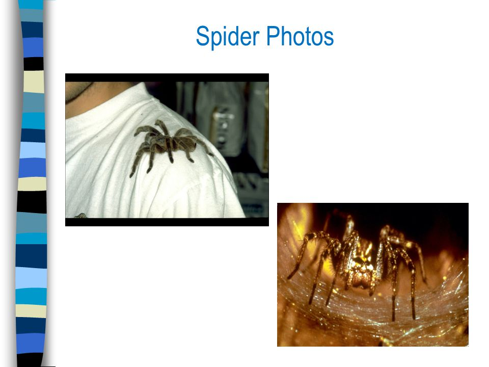 Spider Photos