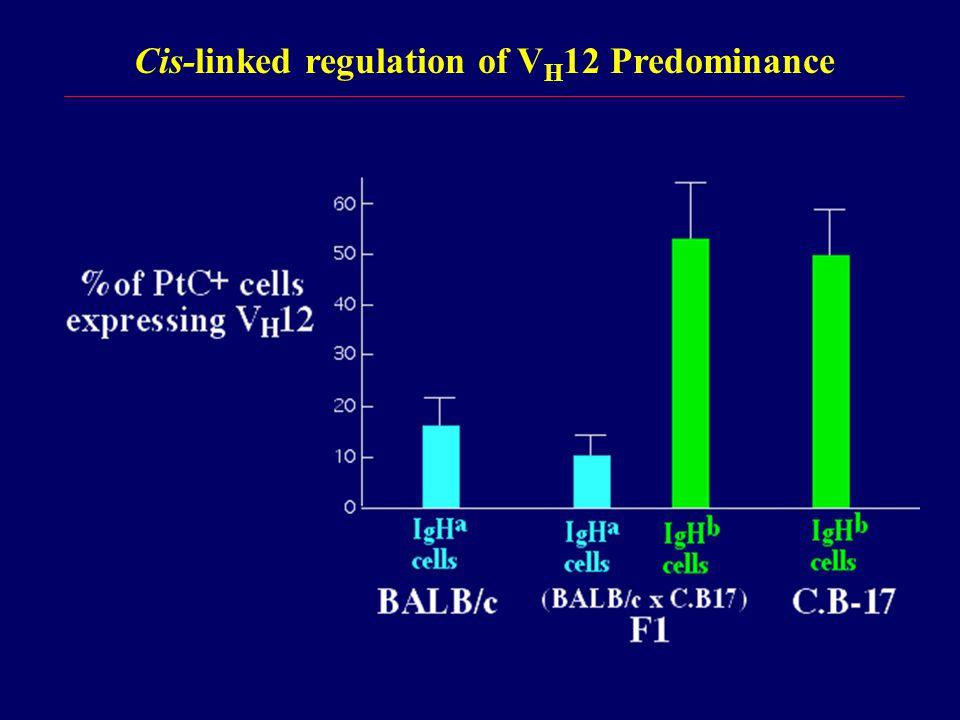 Cis-linked regulation of V H 12 Predominance
