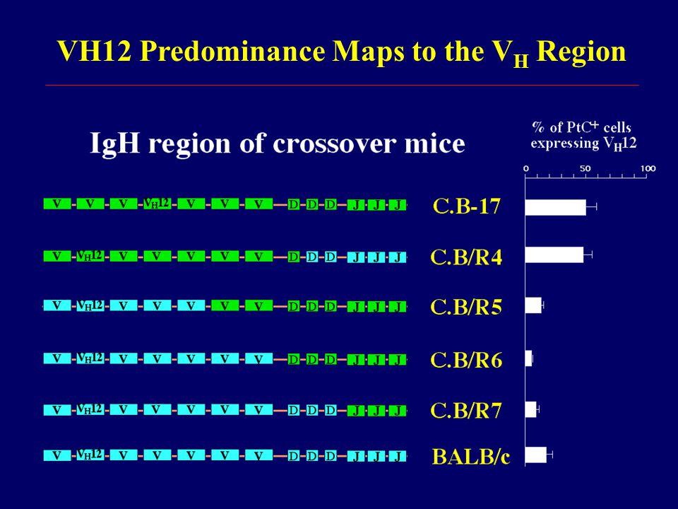 VH12 Predominance Maps to the V H Region