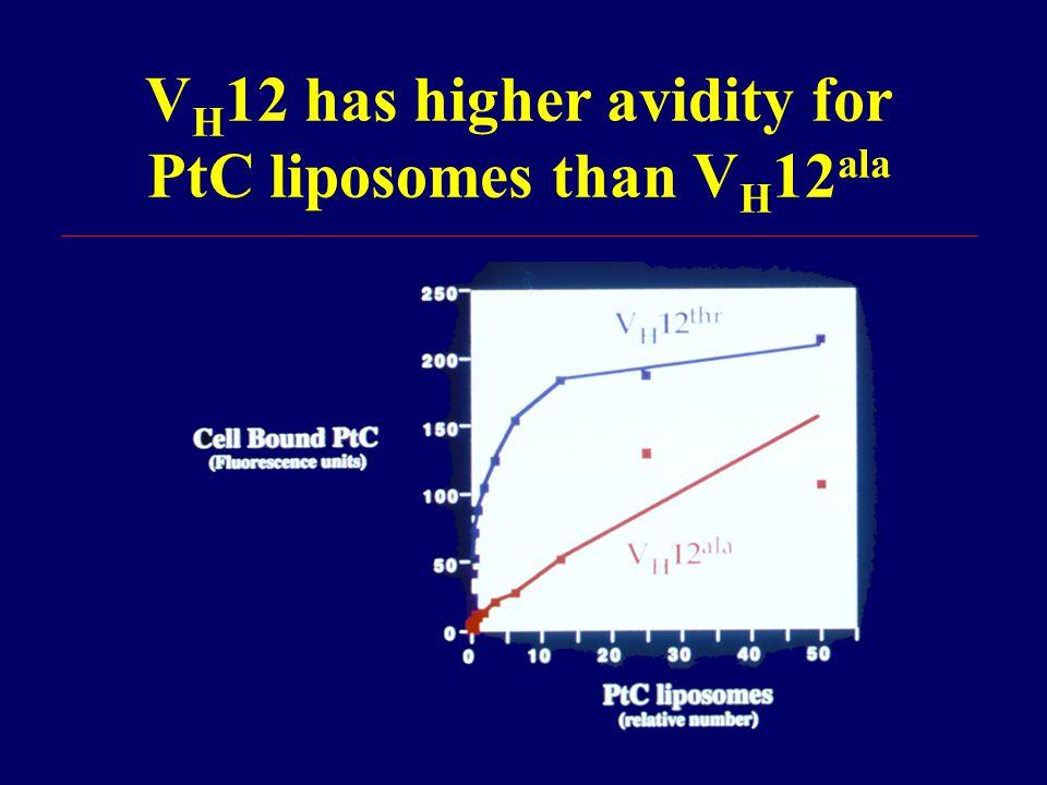 V H 12 has higher avidity for PtC liposomes than V H 12 ala