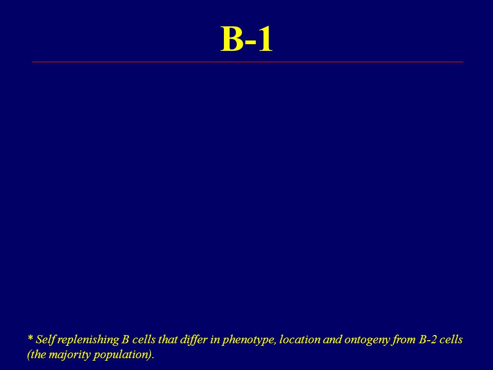 B-1 * Self replenishing B cells that differ in phenotype, location and ontogeny from B-2 cells (the majority population).