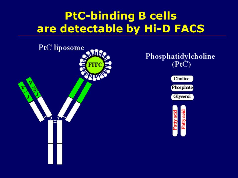 PtC-binding B cells are detectable by Hi-D FACS