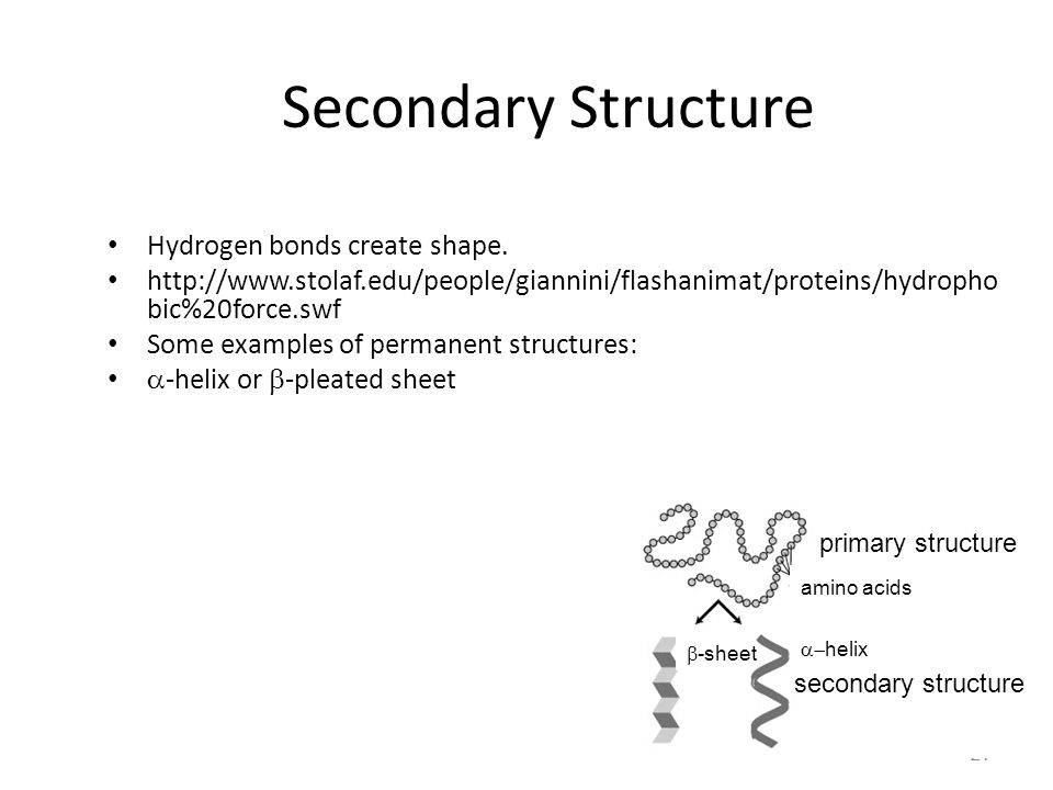 21 Secondary Structure Hydrogen bonds create shape. http://www.stolaf.edu/people/giannini/flashanimat/proteins/hydropho bic%20force.swf Some examples
