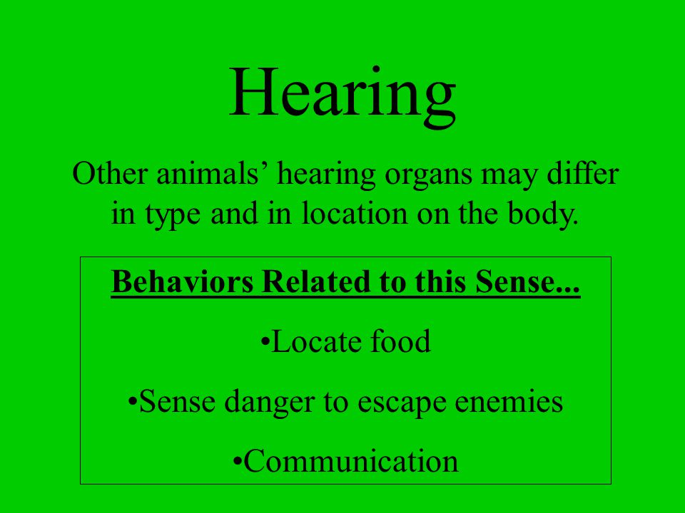 Hearing Accomplished using ears The ear is located on either side of the head. The ears receives sound vibrations from the environment.