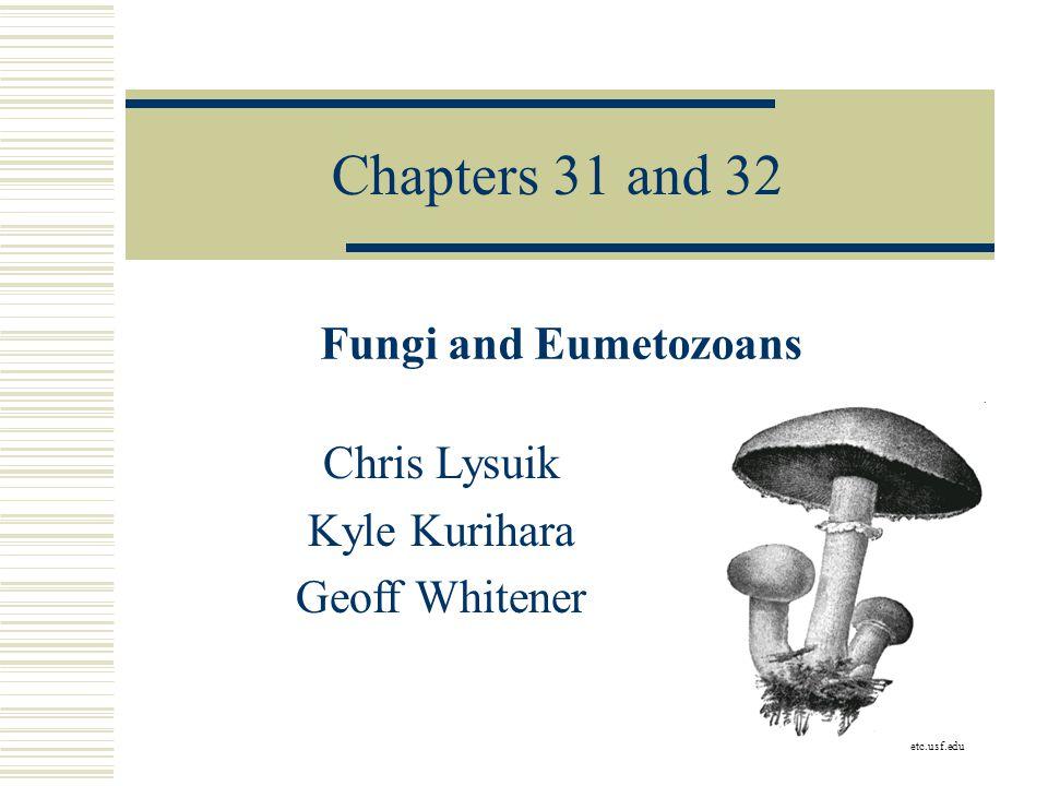 Chapters 31 and 32 Fungi and Eumetozoans Chris Lysuik Kyle Kurihara Geoff Whitener etc.usf.edu