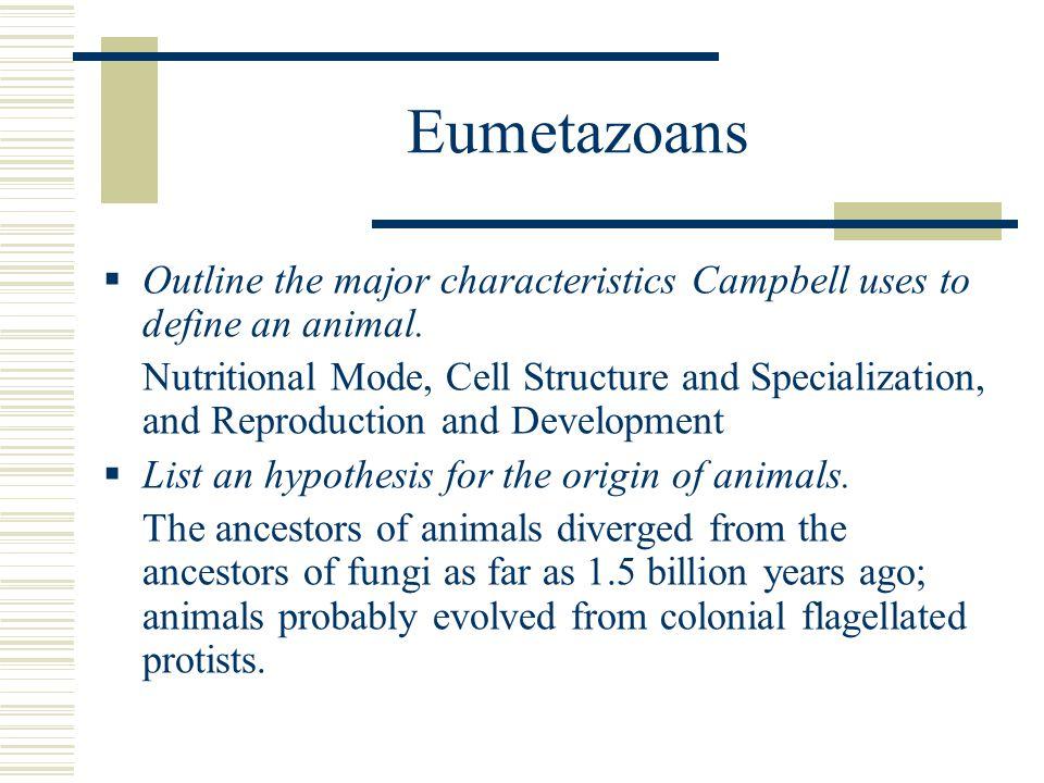 Eumetazoans  Describe the two forms of symmetry of the Eumetazoa.