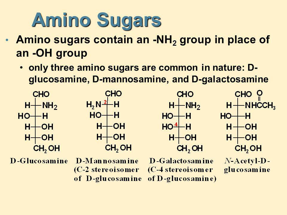 Amino Sugars Amino sugars contain an -NH 2 group in place of an -OH group only three amino sugars are common in nature: D- glucosamine, D-mannosamine,
