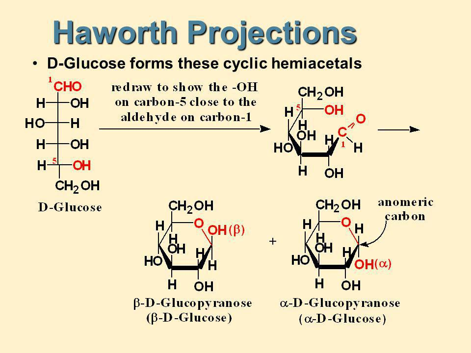 Haworth Projections D-Glucose forms these cyclic hemiacetals